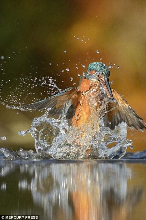 foto-perfecta-martin-pescador10