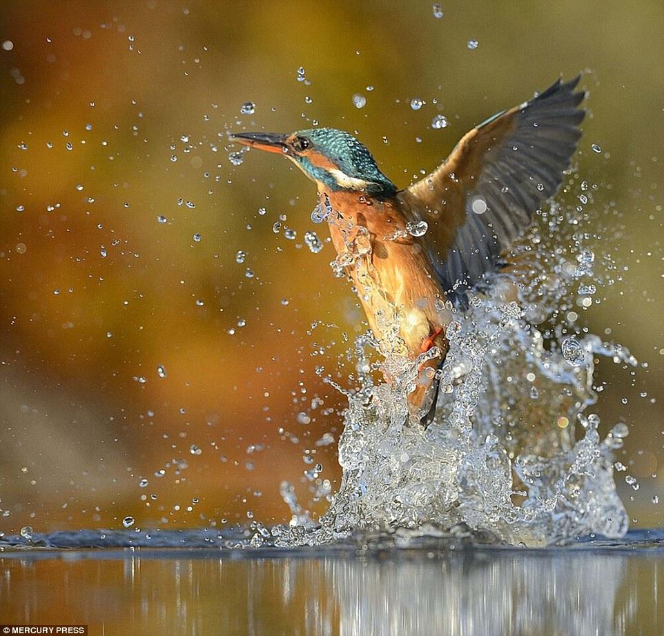foto-perfecta-martin-pescador13