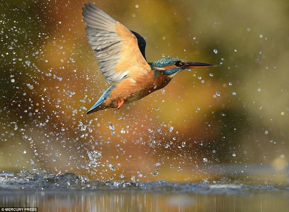 foto-perfecta-martin-pescador14