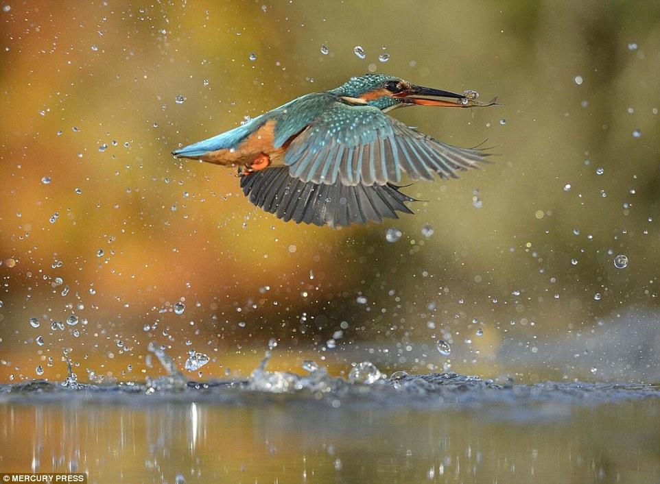 foto-perfecta-martin-pescador17