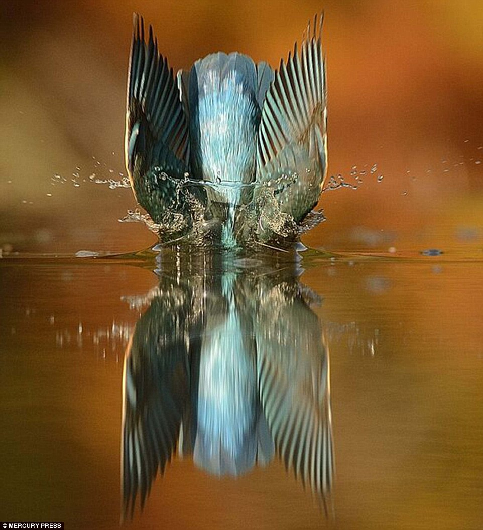 foto-perfecta-martin-pescador5