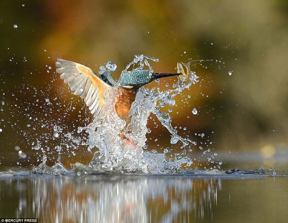 foto-perfecta-martin-pescador6