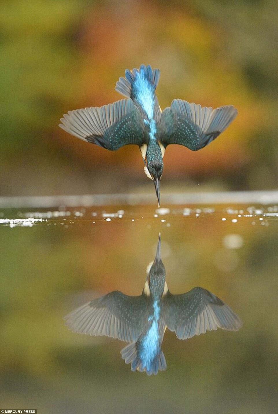 foto-perfecta-martin-pescador9