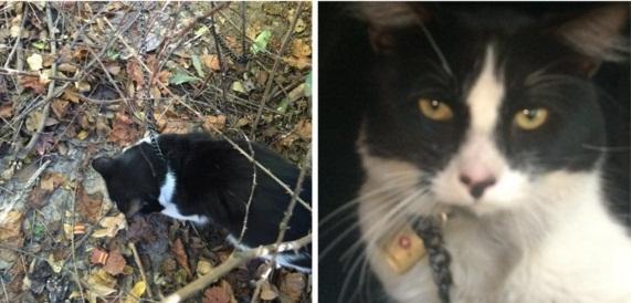 gato encadenado en bosque 1