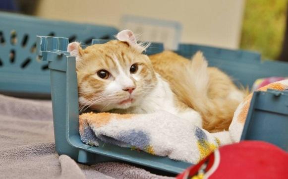 gato rescate autopista 4