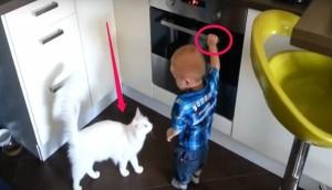 gato salva bebe horno