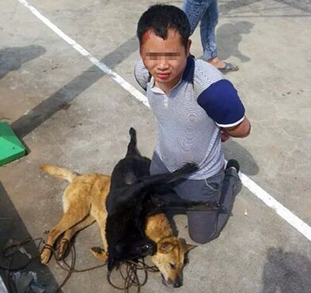 "Pic shows: One of the thieves tortured.   Thieves who tried to steal two dogs were attacked and tortured by angry villagers. The men were beaten and the animals they were trying to dognap were tied around their necks in a barbaric punishment lasting nine hours. Police had to call for reinforcements before the furious villagers – who were demanding 100,000 GBP compensation from the men - would let them go. The incident happened at  Shaping Village in the township of Huangsha in YiZhang County in Central China's Hunan province. The mob were warned they could face charges themselves unless they agreed to let the men go who needed medical treatment for injuries after their illegal detention. Local Wei P'an said:""These strangers came into the village to steal from us. They needed to be taught a lesson. They were pretty scared when the dogs were tied around their necks. It was justice in our eyes. I doubt if they will try and come back and steal from us again."" When extra police eventually moved in to free the men, some villages tried to block the police cars with large rocks and prevent them driving away. Others protested by laying down in front of the cars as the men were escorted back to the police station. No arrests were made. The men were held for questioning and received medical treatment for their injuries. (ends)"