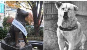 historia-del-perro-mas-leal-del-mundo