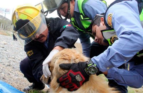 perro-arrollado-es-dado-por-muerto-pero-salvan-su-vida3