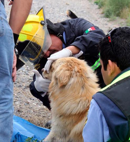 perro-arrollado-es-dado-por-muerto-pero-salvan-su-vida4