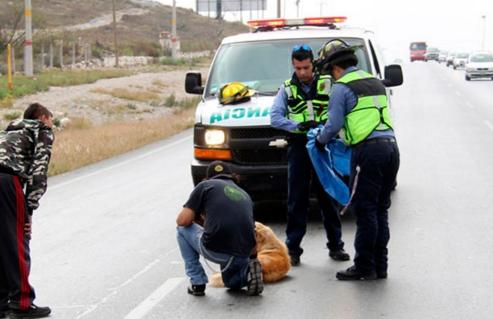 perro-arrollado-es-dado-por-muerto-pero-salvan-su-vida6