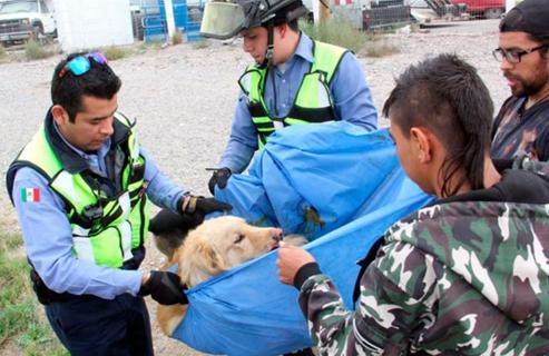 perro-arrollado-es-dado-por-muerto-pero-salvan-su-vida9