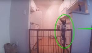 perro escapa cocina