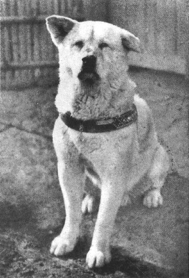 perro-mas-leal-del-mundo3