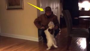 perro-no-reconoce-a-su-amo-con-gorra