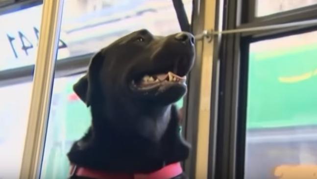perro-viaja-solo-en-autobus-para-ir-al-parque10