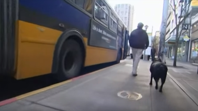 perro-viaja-solo-en-autobus-para-ir-al-parque8