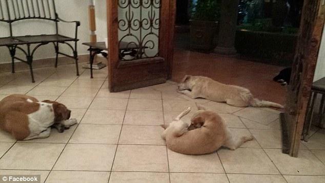 perros asisten a funeral 4