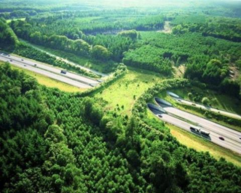 puente para animales 3
