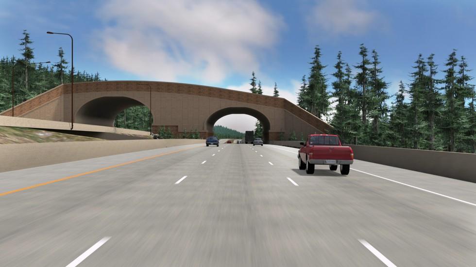 puente para animales 6