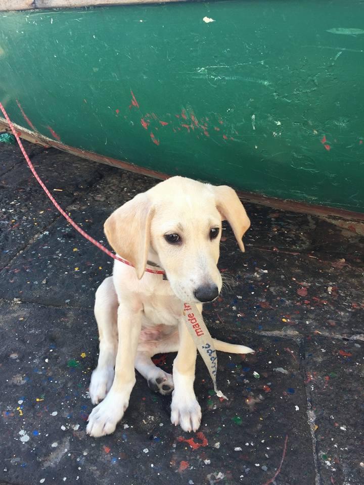 rescatan-perro-en-el-mar2