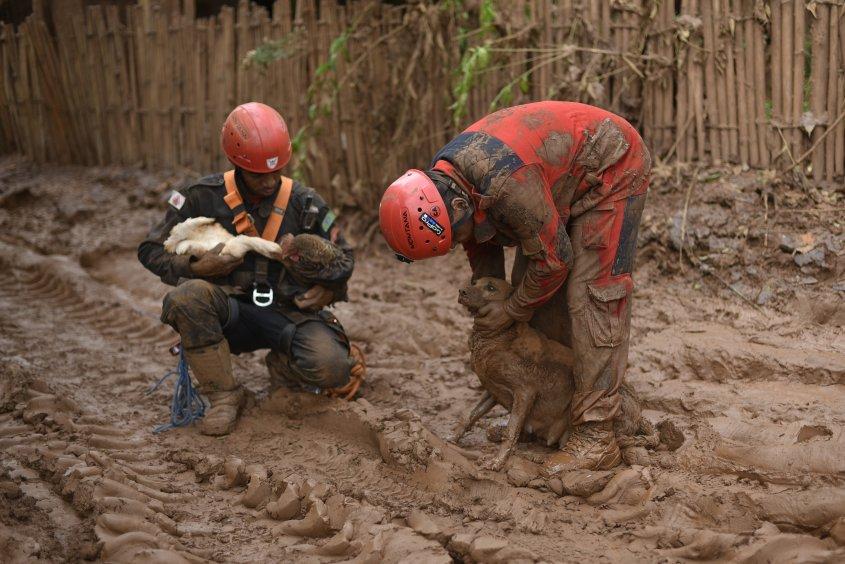 rescate-perro-en-desastre-minero-brasil3