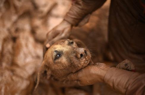 rescate-perro-en-desastre-minero-brasil5
