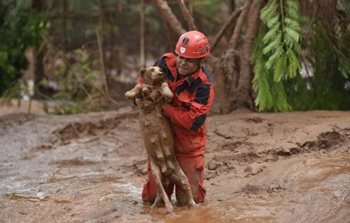 rescate-perro-en-desastre-minero-brasil6