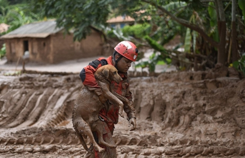 rescate-perro-en-desastre-minero-brasil7