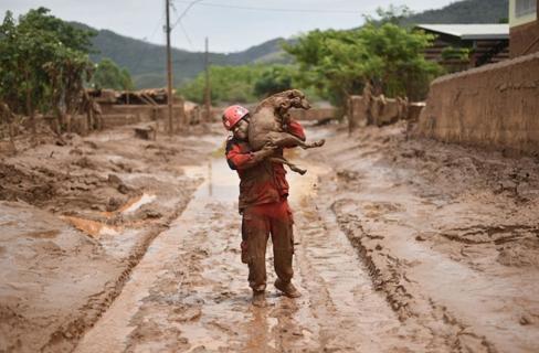 rescate-perro-en-desastre-minero-brasil8