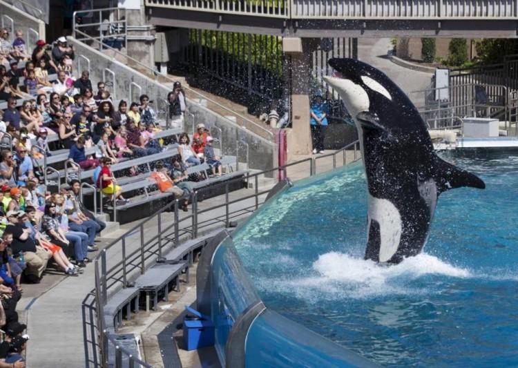 seaworld-pone-fin-a-espectaculo-de-orcas-en-sd4
