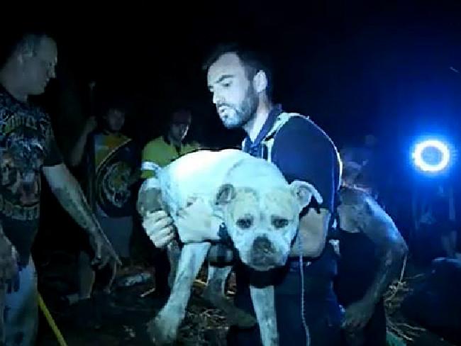 vecinos-salvan-a-perro-de-hombre-sin-hogar1