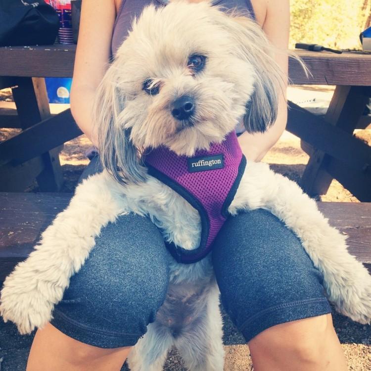 Riley el perro 1