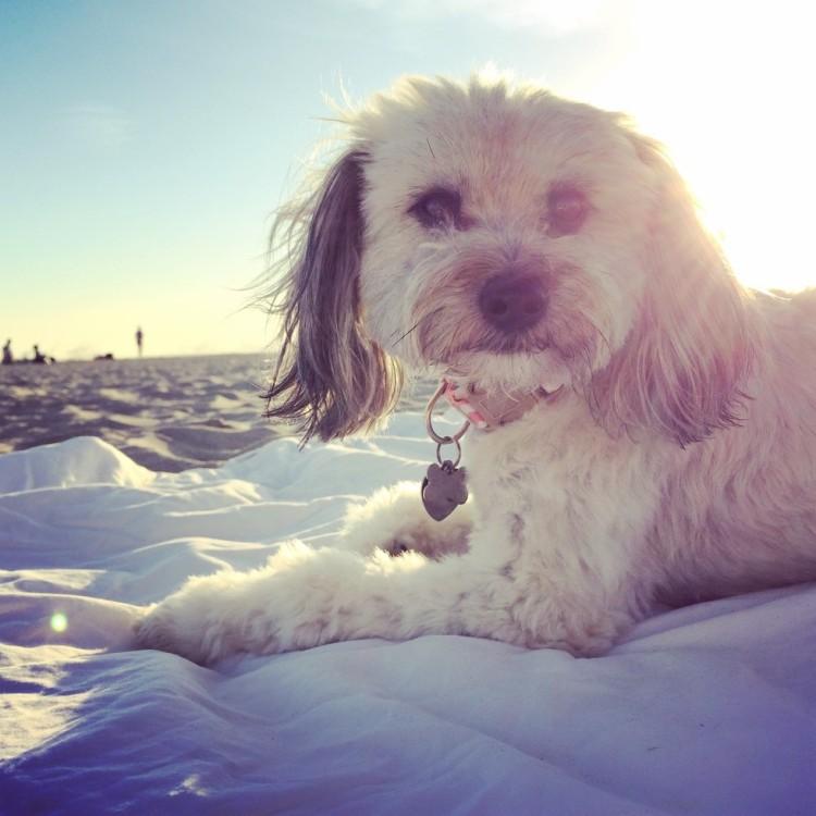 Riley el perro 4