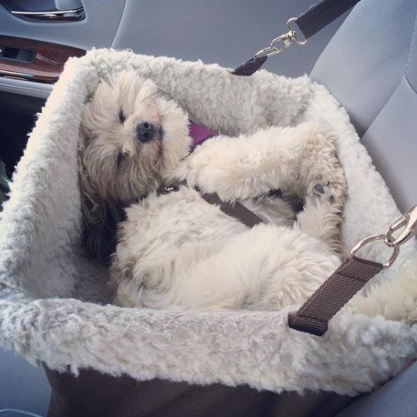 Riley el perro 5