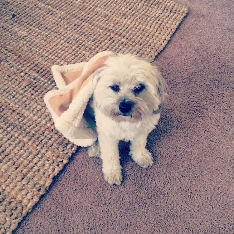 Riley el perro 6
