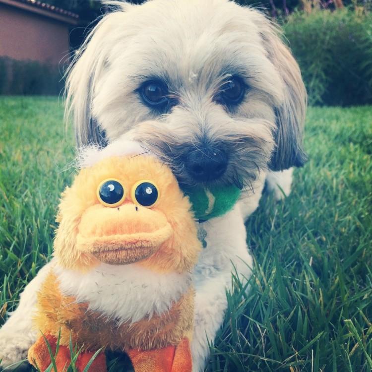 Riley el perro 8
