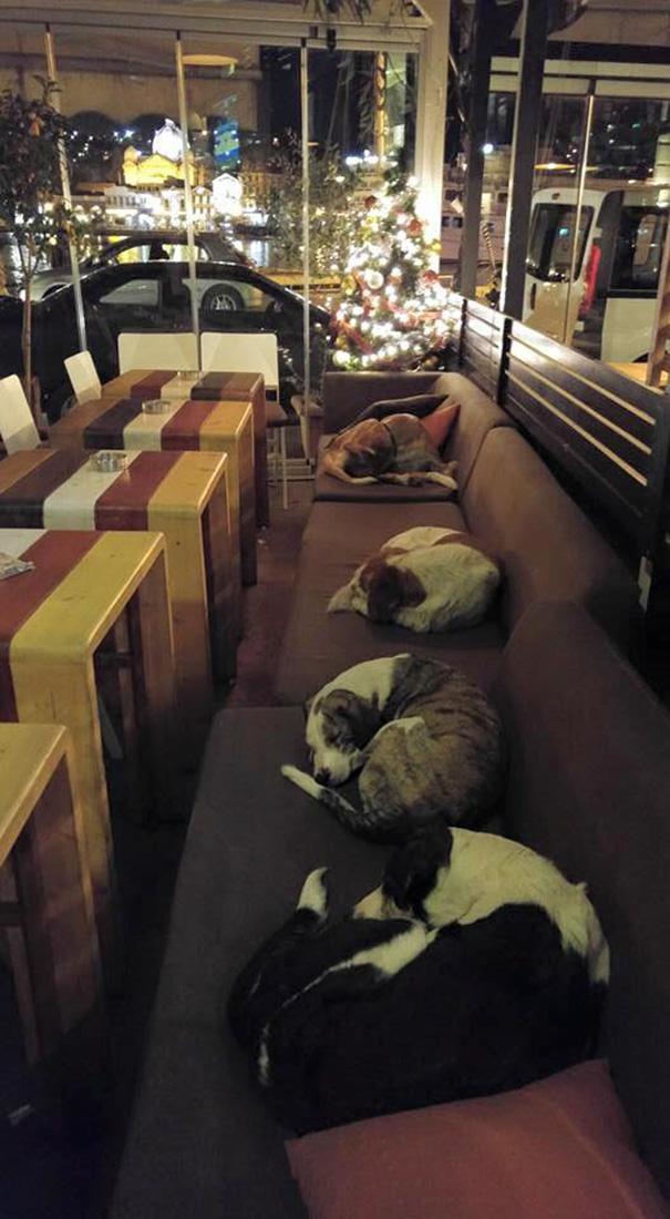 cafeteria-para-perros2