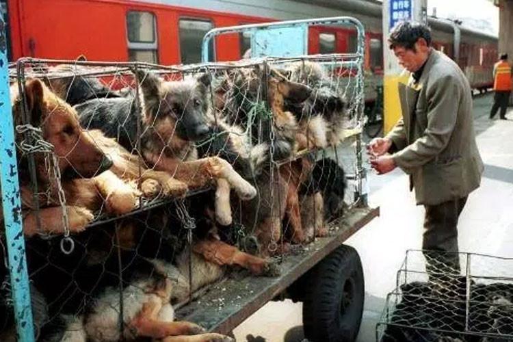 carne-perros-festival-yulin-2015
