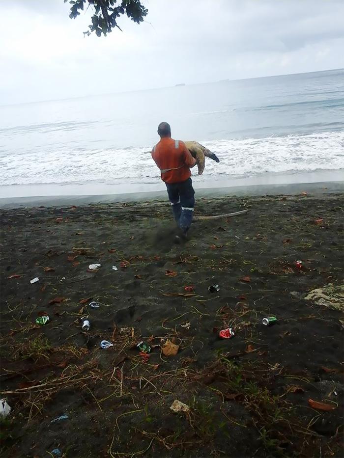 compra-tortugas-y-las-libera-al-mar2