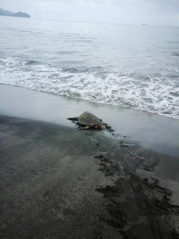 compra-tortugas-y-las-libera-al-mar3