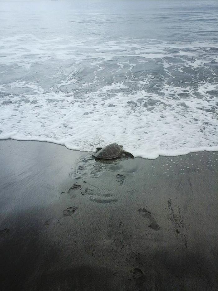 compra-tortugas-y-las-libera-al-mar4