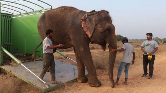 elefante feliz colapsa 1