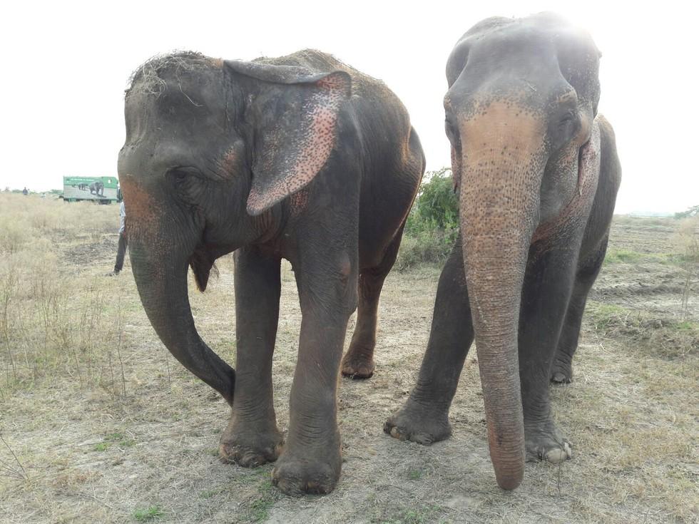 elefante feliz colapsa 2