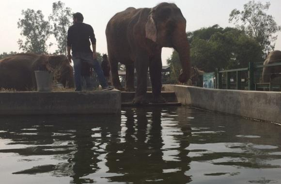 elefante feliz colapsa 3