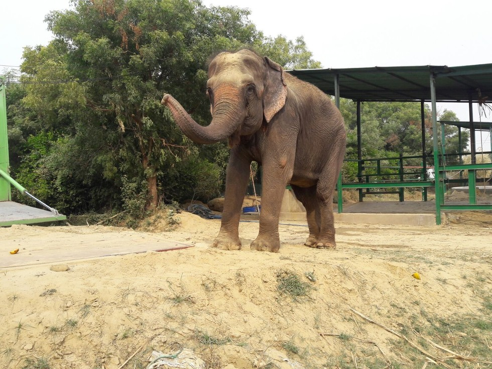 elefante feliz colapsa 5
