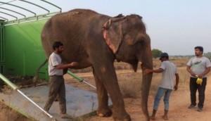 elefante-libre