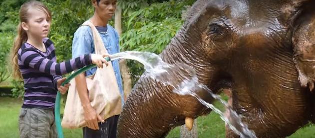 elefantes-maltratados11