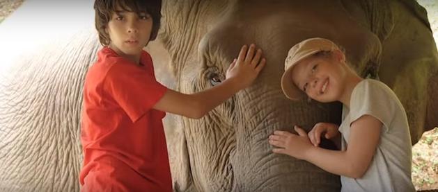 elefantes-maltratados12