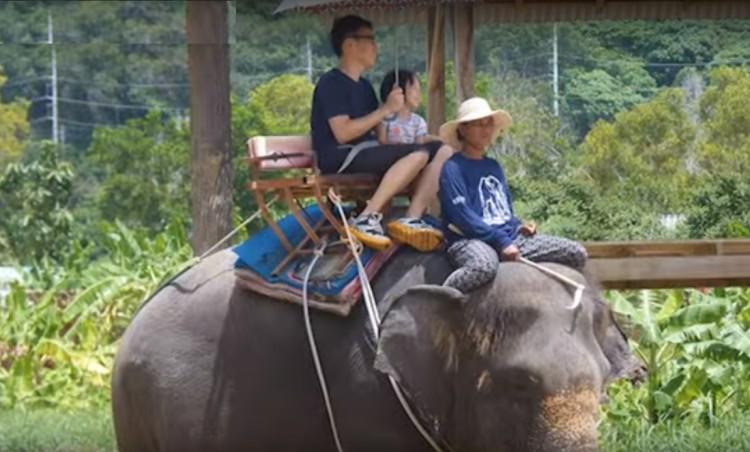 elefantes-maltratados3